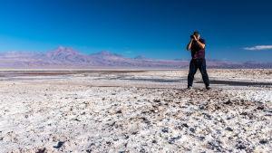 Fotar flamingo i Atacamaöknen.