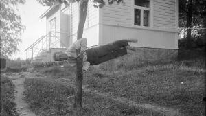 En man håller sig vågrät i luften genom att hålla fast i ett träd. Bilden är tagen 1930 i Bromarf.