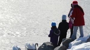 Fyra invandrare står vid en sjö och matar två svanar.