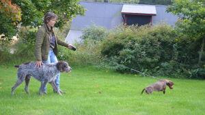 Monica Tallberg och hundarna Jogi och Jaffa tycker inte att vargen hör hemma i bebyggelse.