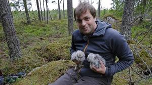 Kimmo Ohtonen viirupöllön poikaset sylissään.