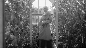 Aino Sibelius kasvihuoneessa