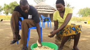 kvinna och man spritar majs i norra uganda
