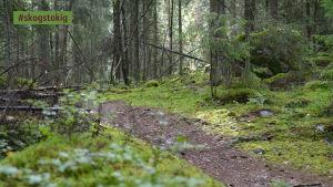 Svinö naturstig är cirka 1,5 kilometer lång.