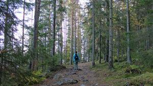 Nainen metsäpolulla takaa