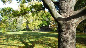 Trädstam och grönska i en park.
