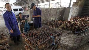 Hälsovårdsmyndigheter i Kina uppmanar allmänheten att undvika torg där man säljer levande fjäderfän