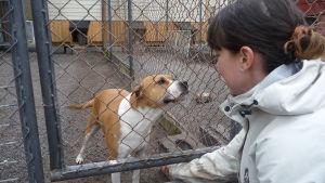 Niina Männistö med Niki, en av de hundar som väntar på ett hem.