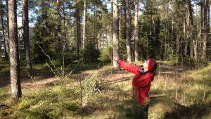Forskare Henna Toivanen mäter upp hur högt trädet är.