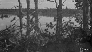 Näkymä Vuosalmen sillanpääasemasta Vuokselle 30.7.1944