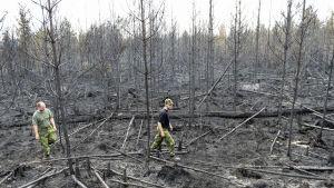 Skogsbranden i Sverige lämnar stor förödelse efter sig