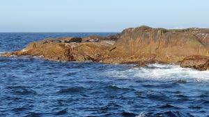 Hylkeitä kalliolla Norja