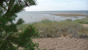 Kalajokis sanddyner