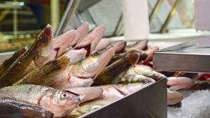 fisk, hagnäs hall