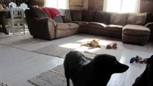 Raatesalmen tilalla viihtyy myös kissoja ja koiria.