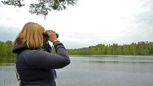 Carola Juselius bångar fåglar vid Gallträsk.