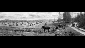 I. K. Inhan valokuvassa Mustialan maanviljelysopiston pelto vuonna 1899