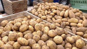 Potatis på Borgå torg