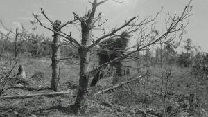 Taistelulähetti ylittämässä aukeata Ihantalan suunnalla 11.7.1944.