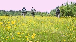 Miehet vaeltavat lemmikkiniityllä kohti vaaleanpunaista taivaanrantaa reput selässä.