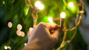 Ljus i träd