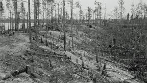 Äyräpään maastoa elokuussa 1941