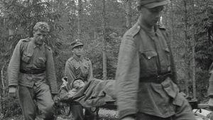Haavoittunutta kannetaan joukkosidontapaikalta eteenpäin. Vuosalmi 13.7.1944.