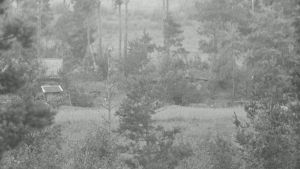Vuosalmen sillanpääaseman maastoa kuvattu tykistön tulenjohtueesta teleobjektiivilla. Vuosalmi 15.8.1944