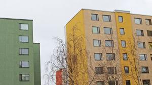 Rönninge i Helsingfors i februari 2016