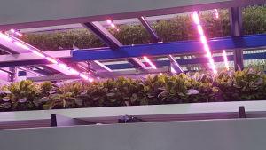 Led-belysning i ett växthus.