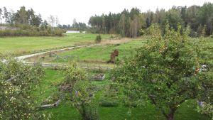 Levande landsbygd på Mielisholm i Pargas.
