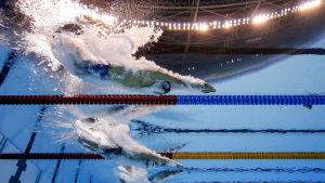 Simmare som dyker in i bassängen filmat under ifrån.