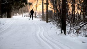 Mies hiihtää keskuspuistossa kaupungin latua pitkin. 11.11.2016