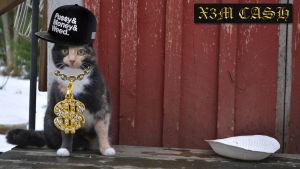 Söt katt med guldsmycke och väldigt lite mat.