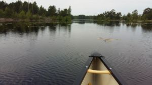 fören på en kanot på Masugnsträsket i Dalsbruk en mulen junidag