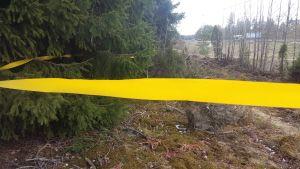 Gula band ska styra hjortdjuren bort från Skärgårdsvägen.
