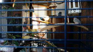 Minna lindebergs fåglar