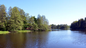 Lummiga träd vid Svartån i Raseborg.