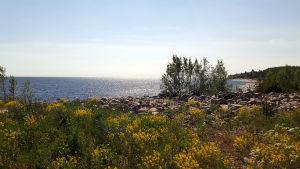 Strand vid Mjölö
