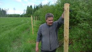 Anders Norrback står vid en cirka två meter lång påle. Dessa pålar utgör stommen i hans vargstängsel.