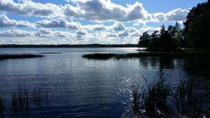 Klart vatten i Littois träsk en månad efter den kemikaliska reningen i maj 2017.