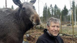 Markku Harju tillsammans med älgkon Mervi.