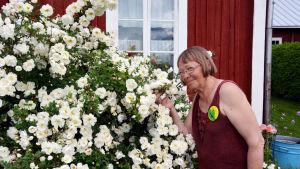 Margaretha Lindholm doftar på midsommarrosorna.