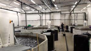 Bassänger inne i en fabrik.