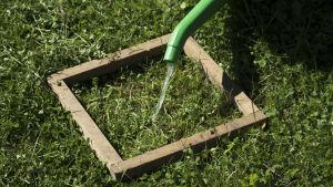 Kehikko nurmikolla, johon kaadetaan vettä