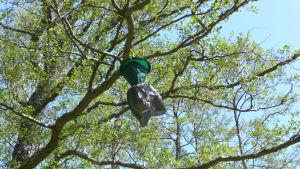 fjärilsfälla hänger i ett träd