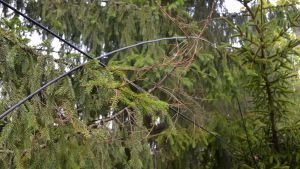 elkablar efter storm i augusti 2017 i Sibbo