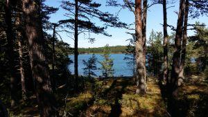 Vy mellan träden ut mot havet. I bakgrunden Houtskärs fastland.
