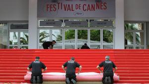 Röda mattan läggs på plats i Cannes.