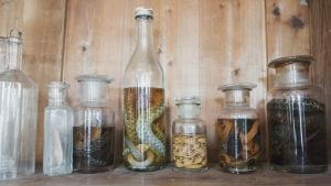 Pullotettuja käärmeitä ja heisimatoja.